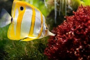 Will My Fish Die in Cloudy Water?, Aquarium Fish Tanks UK