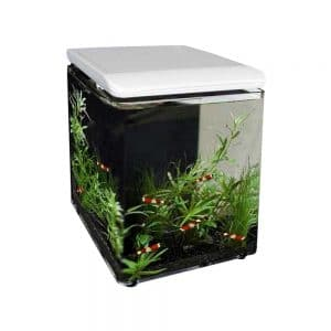 What is the Best Fish Tank to Get For a Child?, Aquarium Fish Tanks UK