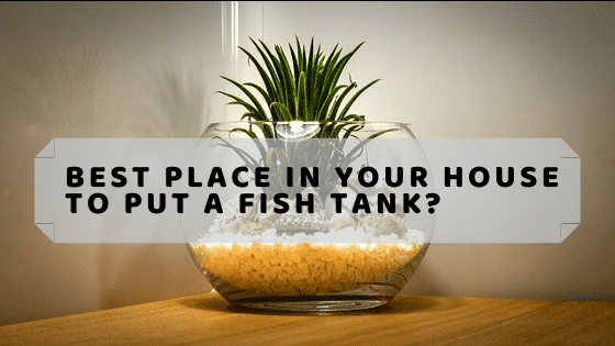 Where Is the Best Place in Your House to Put a Fish Tank?, Aquarium Fish Tanks UK