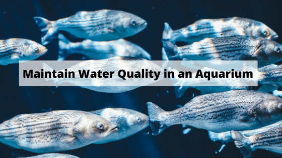 How do you Maintain Water Quality in an Aquarium?