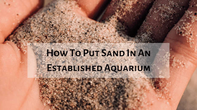 How To Put Sand In An Established Aquarium, Aquarium Fish Tanks UK
