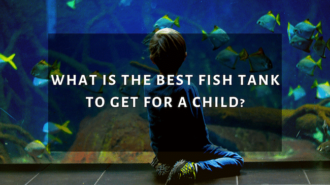 What is the Best Fish Tank to Get For a Child?