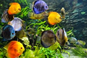 Aquarium Fish Tanks, Aquarium Fish Tanks UK
