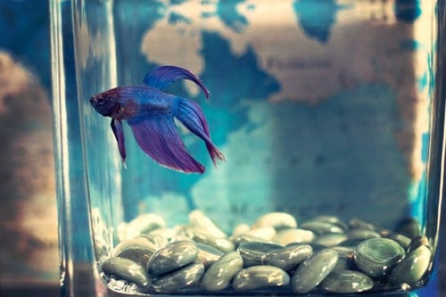 Should You Take Fish Out Of Tank When Cleaning, Aquarium Fish Tanks UK