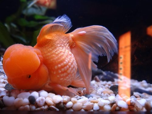 Is Sand Or Gravel Better For Freshwater Aquarium