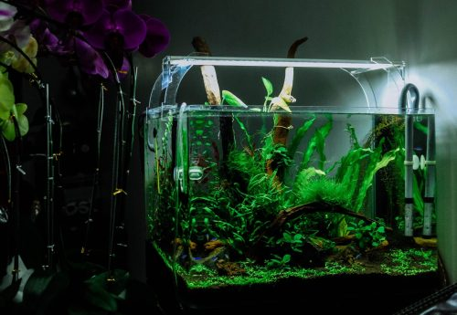 Do I Take My Fish Out When Cleaning The Tank?