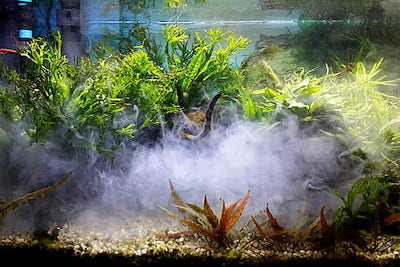 Will Cloudy Water From Sand Hurt Fish? 4 Ways to Get Rid of It, Aquarium Fish Tanks UK