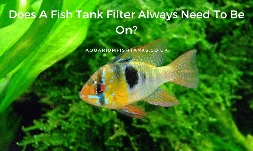 Does A Fish Tank Filter Always Need To Be On
